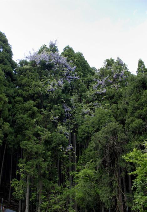 Miyamakitajima0425